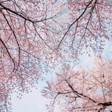 春のイベントレポ